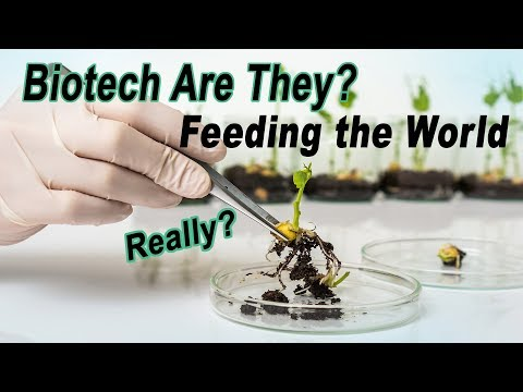 Are Biotech Companies Creating GMO Seeds To Feed The World?