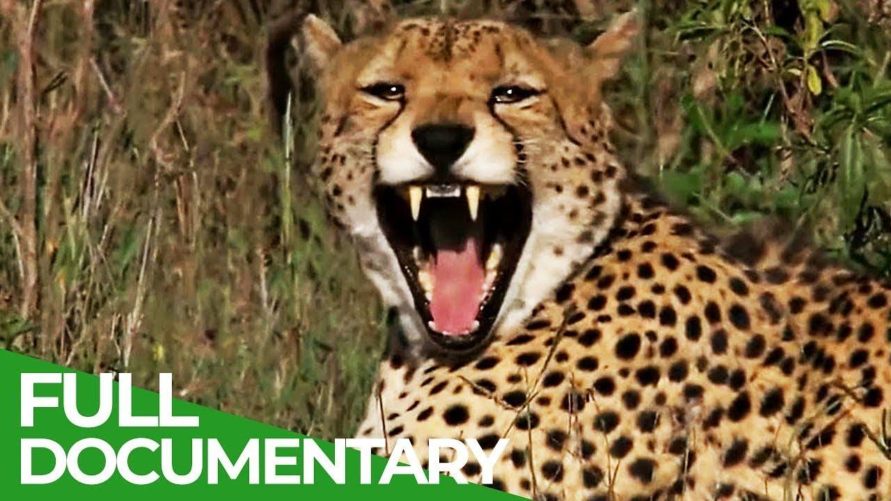 Kenya: A Trip through Wildness | Free Documentary Nature