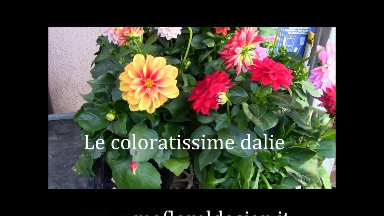 Piante da giardino youtube - Pianta da giardino ...