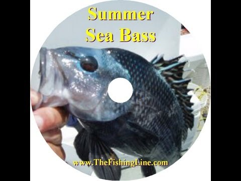 Summer Sea Bass Fishing