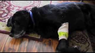My Poor Dog (Vlog #11)