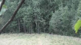 Охота на медведя осенью видео