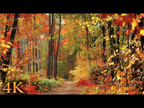11 HOURS of Enchanting Autumn Nature Scenes + Relaxing Piano Music 4K UHD