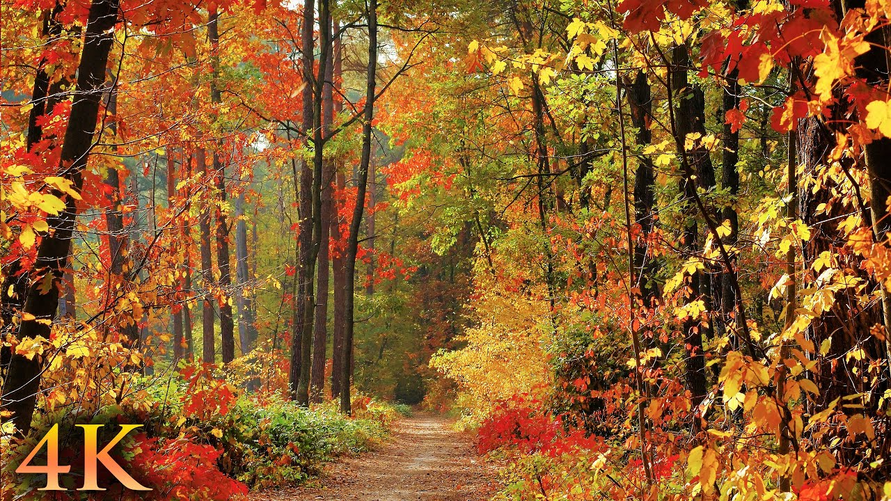Download 11 HOURS of 4K Enchanting Autumn Nature Scenes + Relaxing Piano Music for Stress Relief