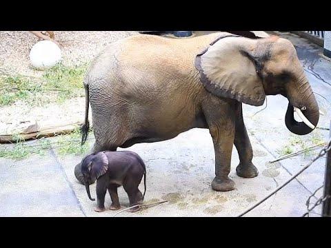 شاهد: حديقة حيوانات فيينا تكشف عن صغيرها الوافد الجديد  - نشر قبل 11 ساعة
