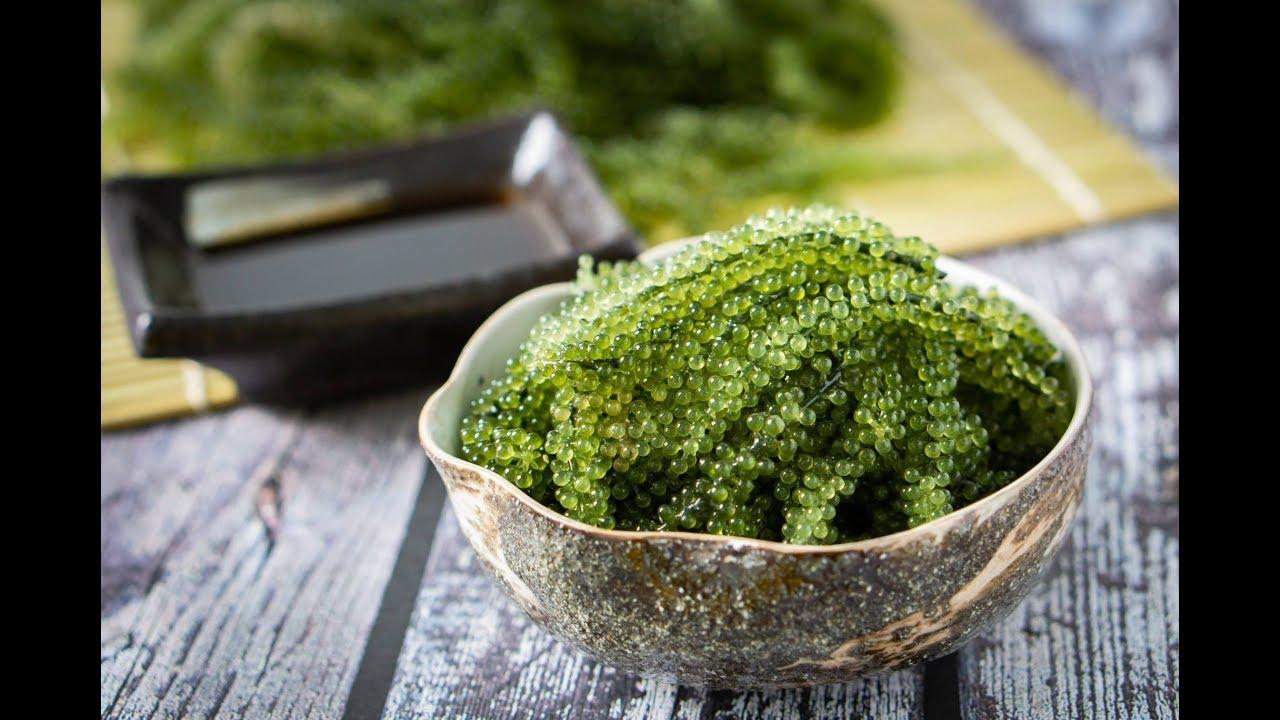 Cách sơ chế rong nho Nhật Bản (ăn rong nho giòn rụm)