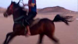 الحصان المشهر في فيديو أكثر من رائع
