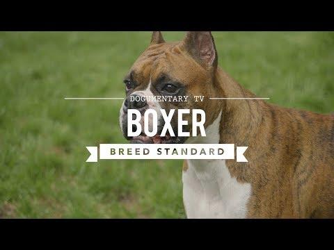 BOXER DOG UKC BREED STANDARD