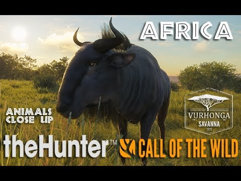 theHunter call of the wild   Africa   Animals Up Close   4k   YouTube