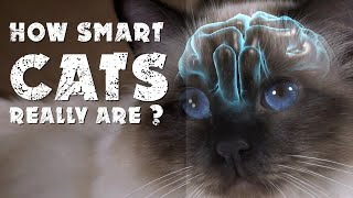How smart cats really are