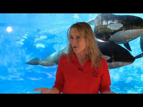 How SeaWorld Cares For Animals In Cold Weather | SeaWorld Orlando