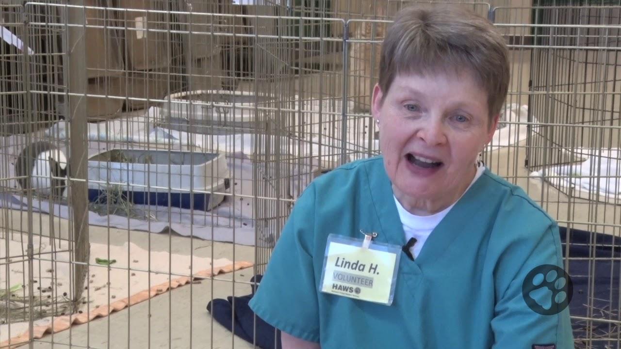 Volunteer At Haws Humane Animal Welfare Society