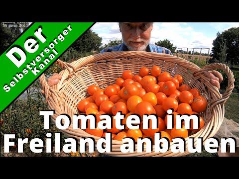 Tomaten im Freiland anbauen. Meine Erfahrungen.