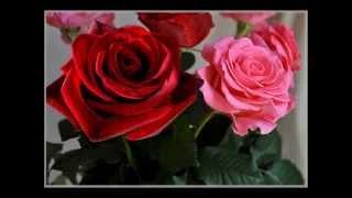 Музыка цветов. Для женщин. Самые красивые цветы!