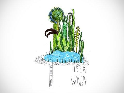 Ibex Walia - Méditation