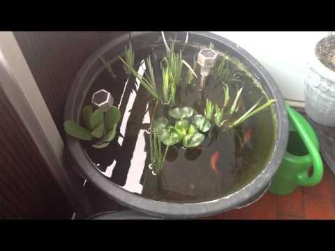 Miniteich beispiel zum selber machen doovi for Miniteich mit fischen