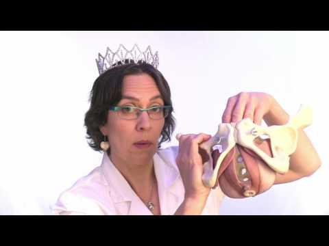 Poliklinika Harni - Seksualna funkcija bolja s laparoskopskim mrežicama u terapiji cistocele