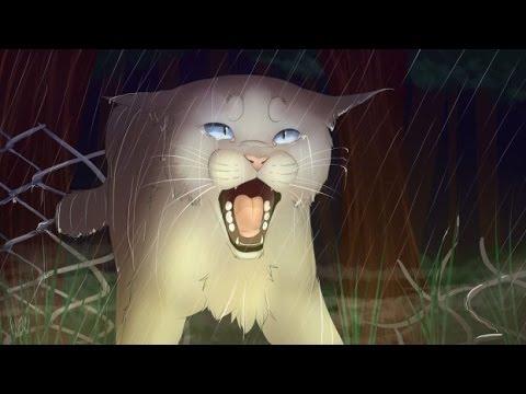 Top 11 Saddest Warrior Cat Deaths *Fight me*