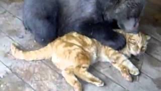 Кот против медведя. Сила духа.mp4