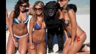Приколы-обезьяны тоже люди- JOKES-monkeys are people too