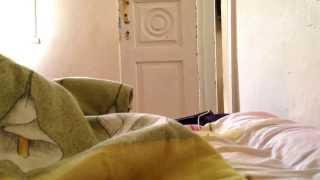 Кошка несет котят в постель)