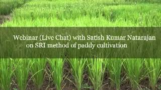 SRI method of paddy cultivation -  Satish Kumar Natarajan - www.agricutlureinformation.com