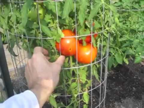 Garden Update #4 Red Peppers Tomatoes Raised Bed Square Foot Vegetable Gardening Harvest