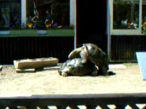 schildkröten machen komische geräusche ;-)