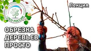 Как проводить обрезку плодовых деревьев. Лекция.(, 2015-12-30T19:25:02.000Z)