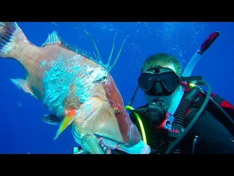 GREENISH-BLUE epic spearfishing Florida's gulf coast