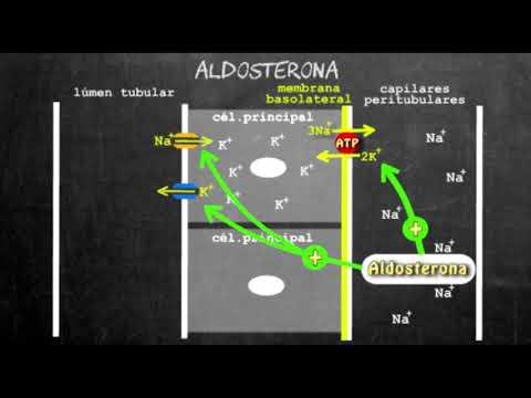 Aldosterona   Secreção De Potássio E Reabsorção De Sódio