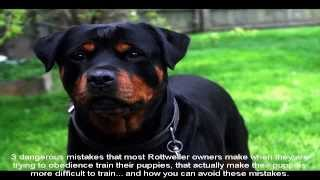 Potty Training A Rottweiler Puppy Trained