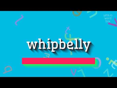 "How to say ""whipbelly""! (High Quality Voices)"