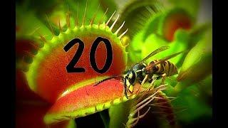 Top 20 / Venus flytrap - Venusfliegenfalle
