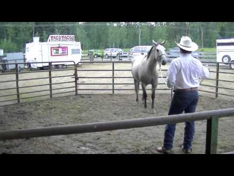 Colt Start - Rescue Horse - Chance - June 29