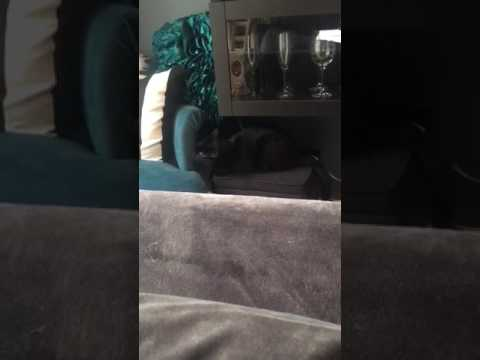 Black cat attack