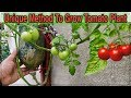 - Best Method To Grow Tomato Plant in Plastic Hanging Bottle ll Vertical Gardening ll No Space Garden