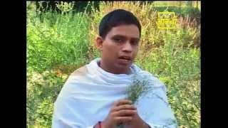 Ayurvedic use Purple Fleabane (Sahdevi)