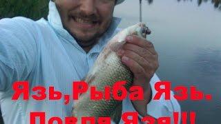 Язь. Рыба язь видео. Ловля язя на спиннинг летом видео 2015