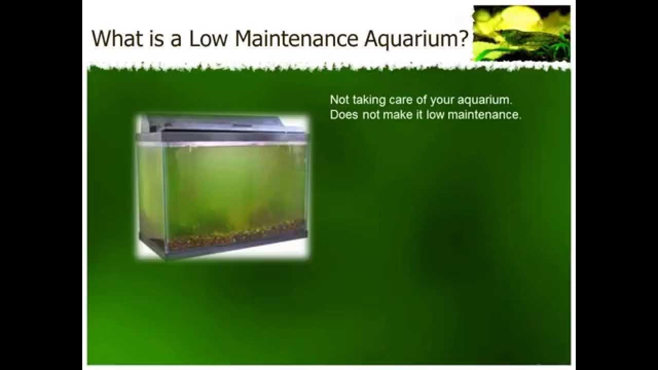 Freshwater aquarium fish maintenance - How To Set Up Low Maintenance Aquariums
