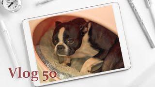 ? 애견호텔&유치원 강아지들의 일상 l 브이로그 #50