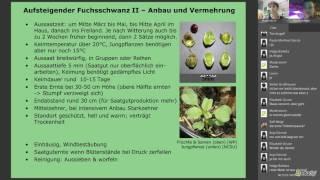Webinar: Alte and neue Nutzpflanzen (Teil 1) mit Eike Wulfmeyer