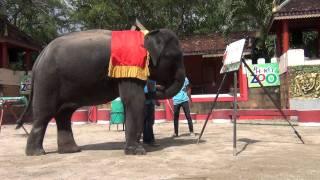 Шоу со слонами в зоопарке Пхукета, Тайланд