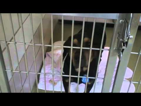 what's-new-at-the-cuyahoga-county-animal-shelter-this-week?-2-16-12