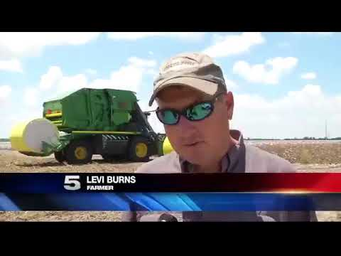 Cotton Farmers Benefiting From Drought