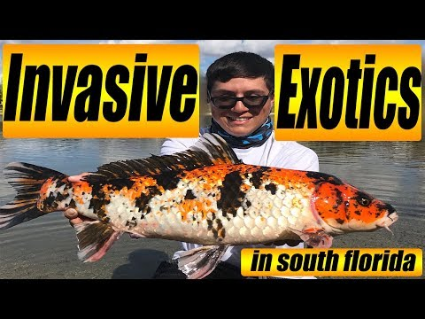 Invasive Fish Species In Florida (FISHING TUTORIAL)
