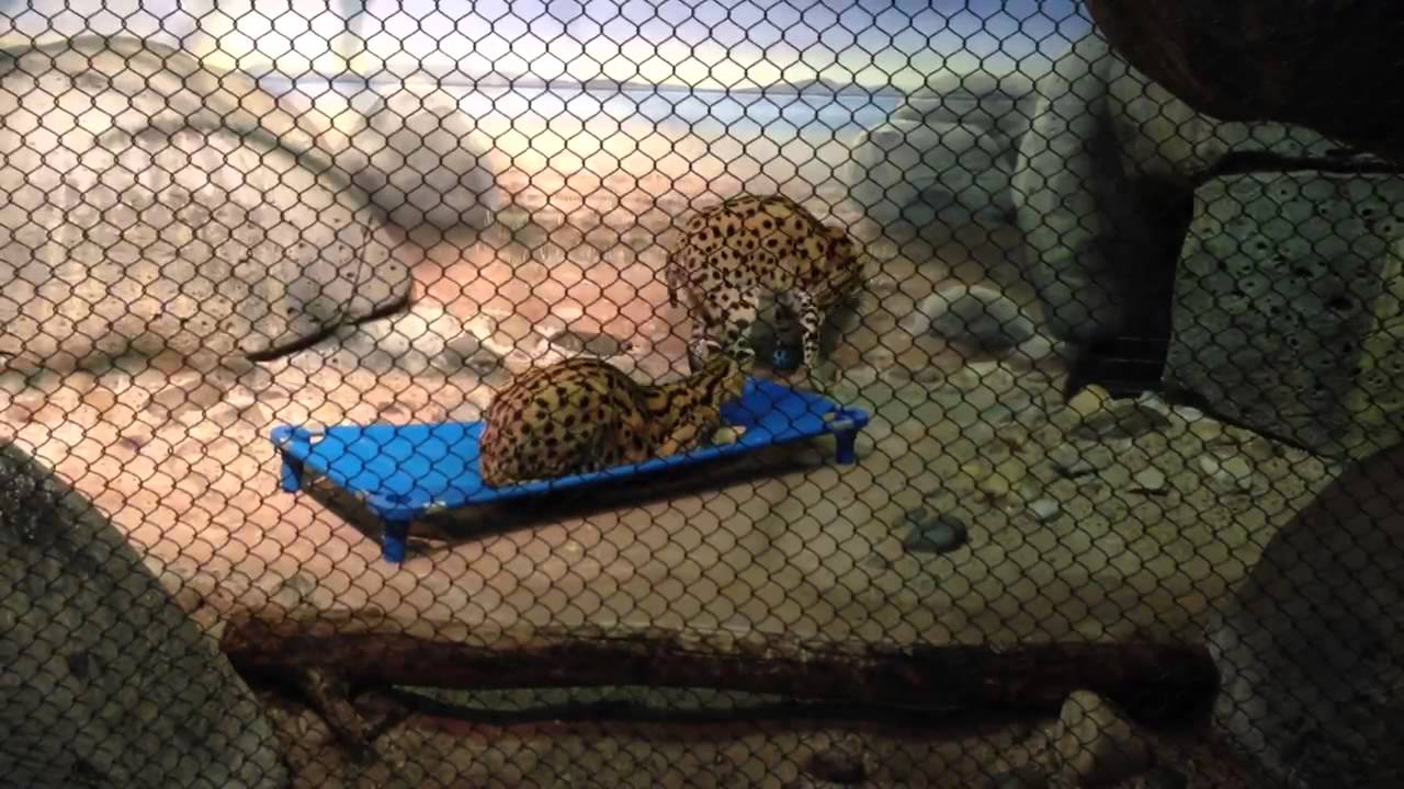Pictures Of The Staten Island Zoo