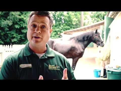 Tips & Tricks To Exploring Busch Gardens In Williamsburg, VA