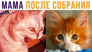 МАМА ПРИШЛА С СОБРАНИЯ))) Приколы с котами | Мемозг #553 видео