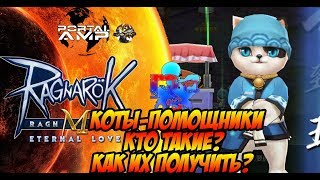Коты помощники в Ragnarok M: Eternal Love Гайд.